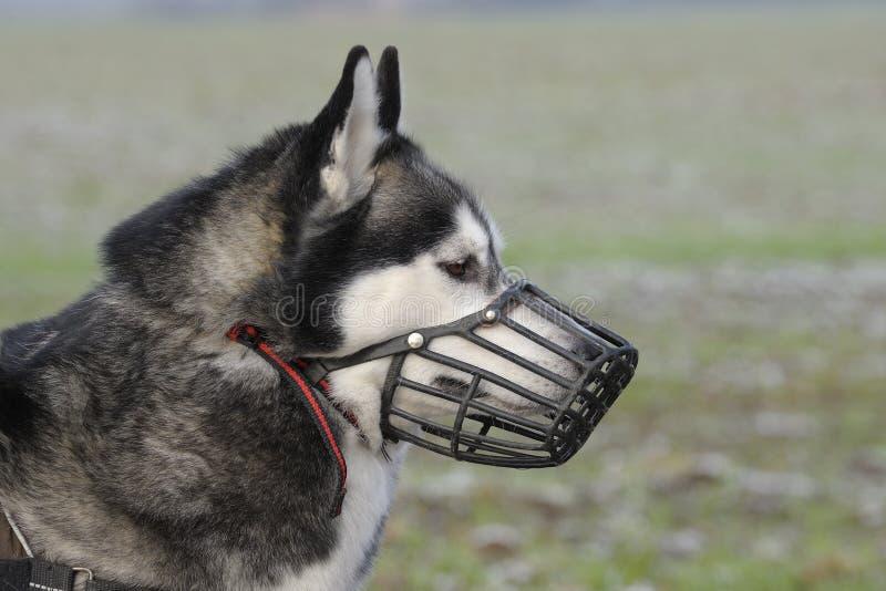 Perro con el bozal foto de archivo
