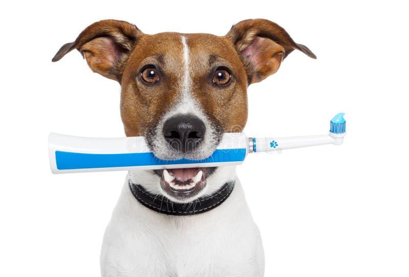 Perro con el cepillo de dientes eléctrico foto de archivo libre de regalías
