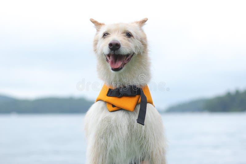Perro con el chaleco salvavidas fotos de archivo