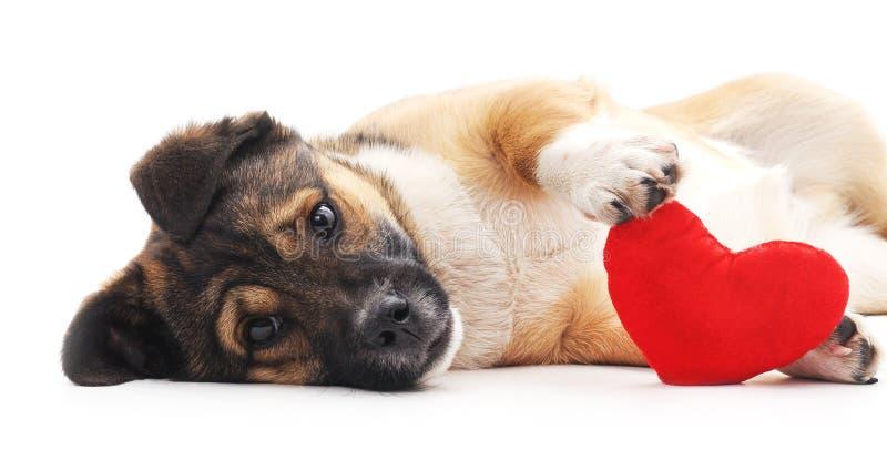 Perro con el corazón fotos de archivo