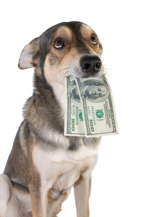 Perro con el dinero fotos de archivo libres de regalías