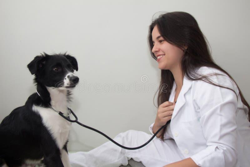 Perro con el estetoscopio que examina a un veterinario de sexo femenino fotografía de archivo