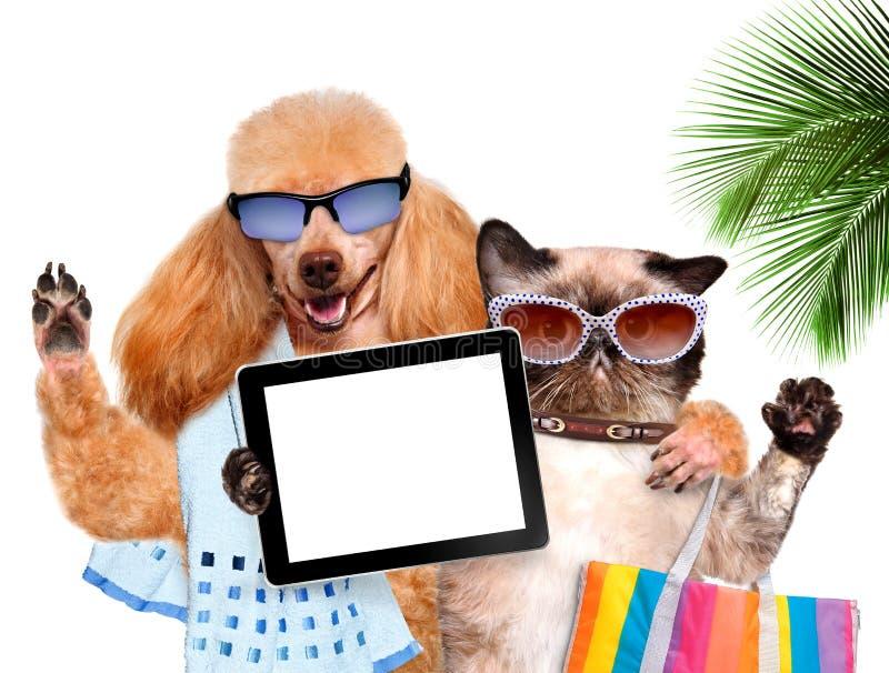Perro con el gato que toma un selfie así como una tableta imágenes de archivo libres de regalías