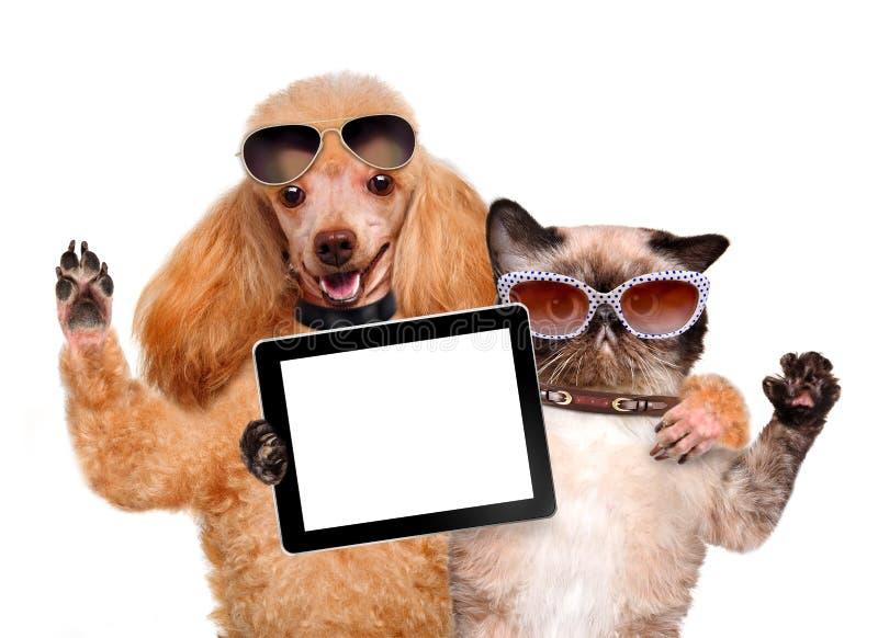 Perro con el gato que toma un selfie así como una tableta foto de archivo