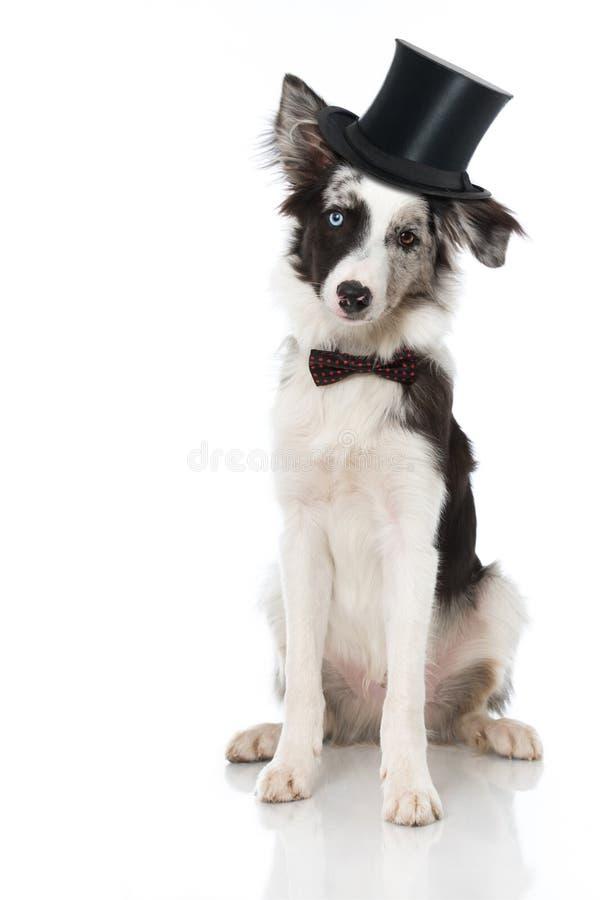 Perro con el lazo fotografía de archivo libre de regalías