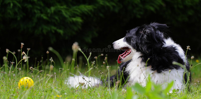 Perro con la bola en el sol foto de archivo libre de regalías