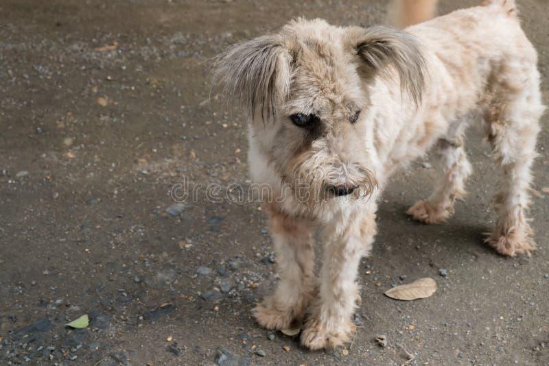 Perro con la catarata fotografía de archivo