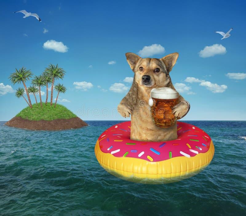 Perro con la cerveza en un buñuelo inflable foto de archivo