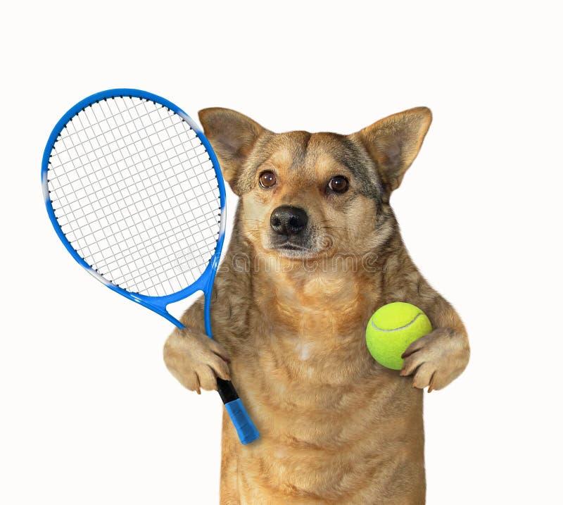 Perro con la estafa y la bola de tenis fotos de archivo libres de regalías