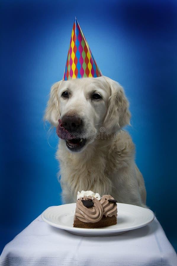 Perro con la torta de cumpleaños imagen de archivo libre de regalías