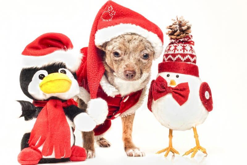 perro con las figuras de la navidad imagen de archivo