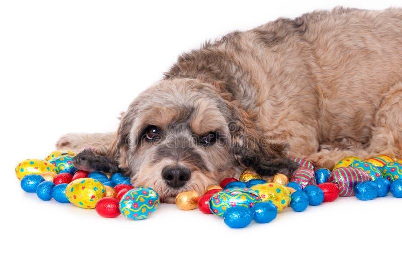 Perro con los huevos de Pascua imagen de archivo libre de regalías