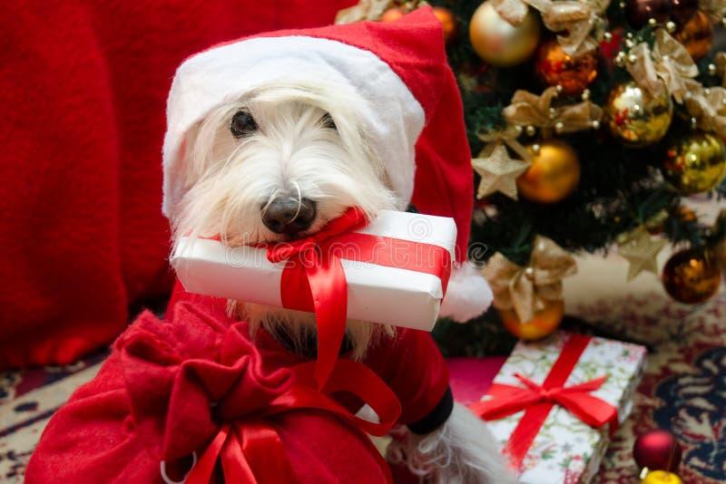 Perro con los regalos de la Navidad foto de archivo