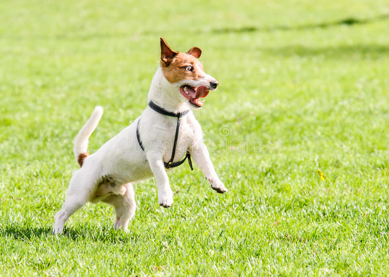 Perro con mirada loca divertida imágenes de archivo libres de regalías
