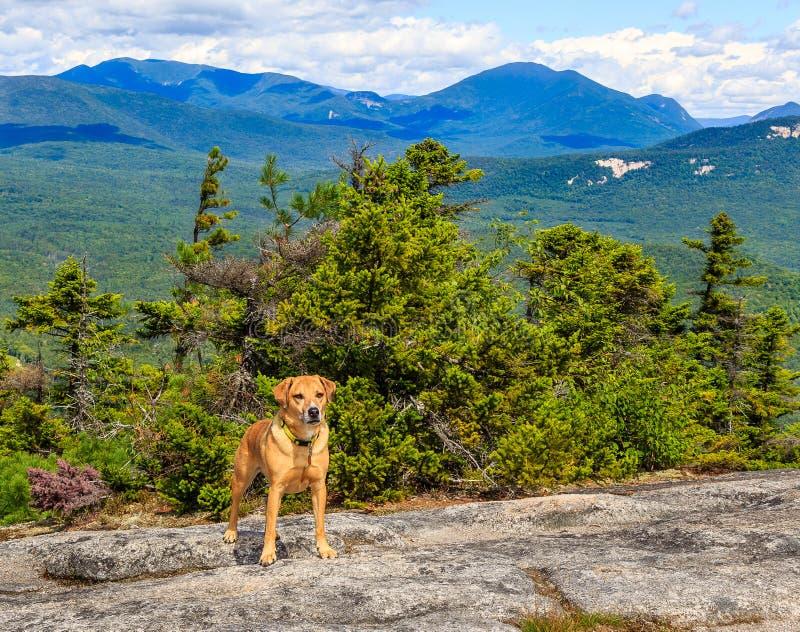 Perro con paisaje de la montaña foto de archivo