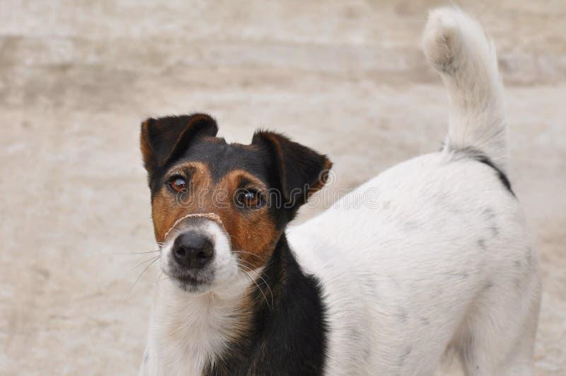 Perro con polvo en el bozal fotografía de archivo libre de regalías