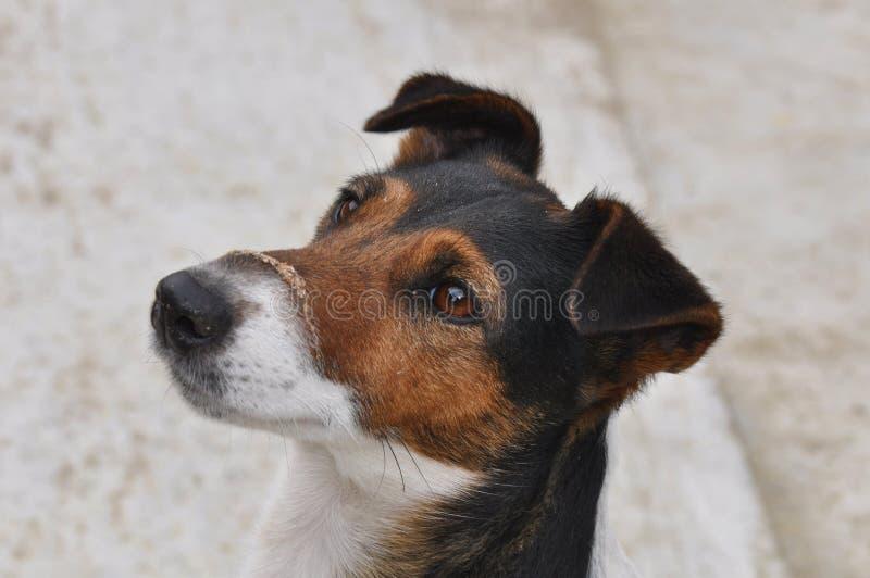 Perro con polvo en el bozal imágenes de archivo libres de regalías