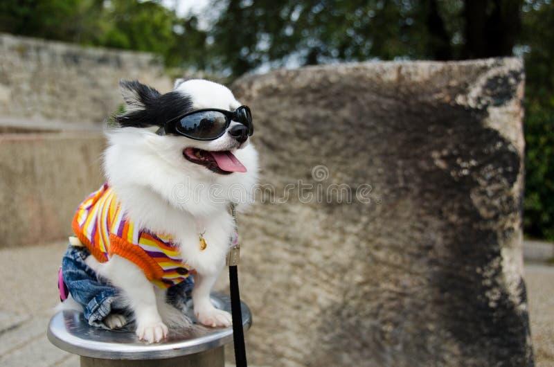 Perro con ropa imágenes de archivo libres de regalías