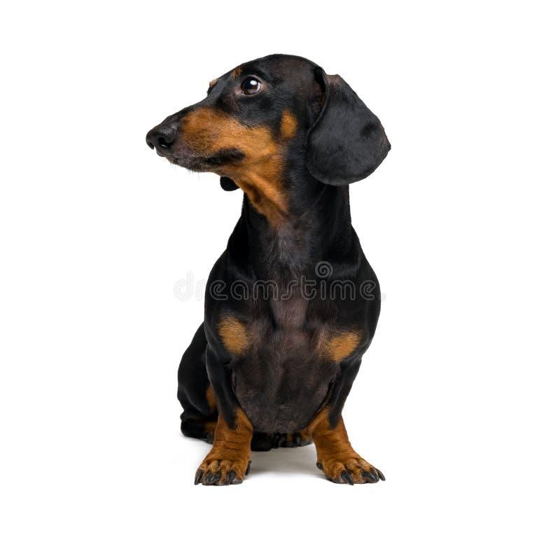 Perro con su se?ora Exposici?n canina competici?n Malamute de Alaska fotografía de archivo