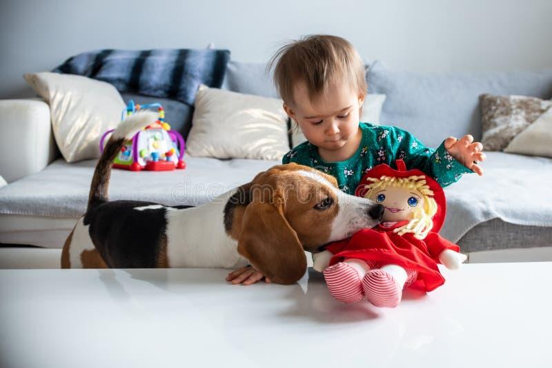 Perro con un bebé caucásico lindo Toma del perro del beagle y muñeca de la mordedura del bebé lindo en sala de estar imágenes de archivo libres de regalías