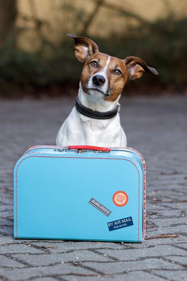 Perro con un bolso azul foto de archivo libre de regalías
