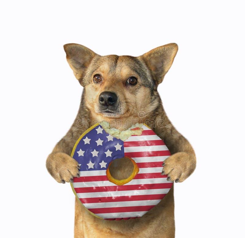 Perro con un buñuelo americano mordido imagen de archivo