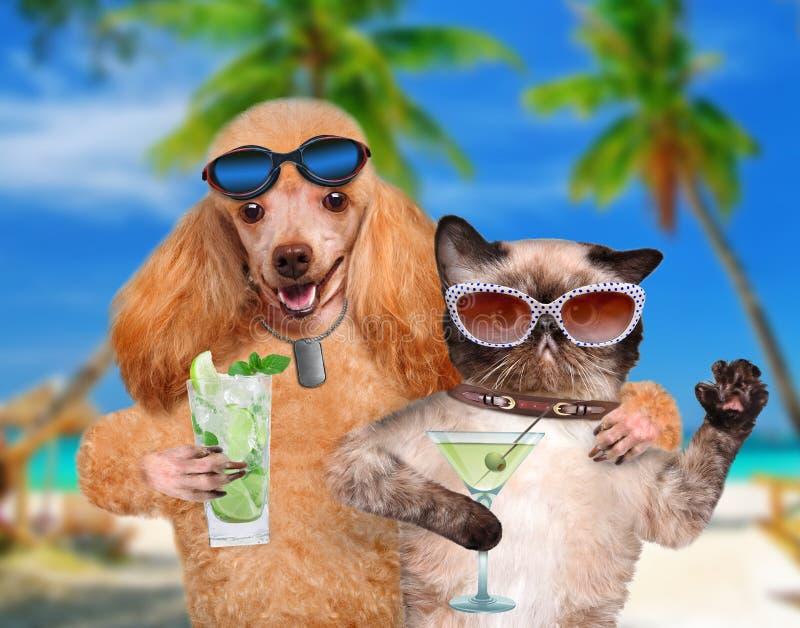 Perro con un gato el vacaciones imagen de archivo