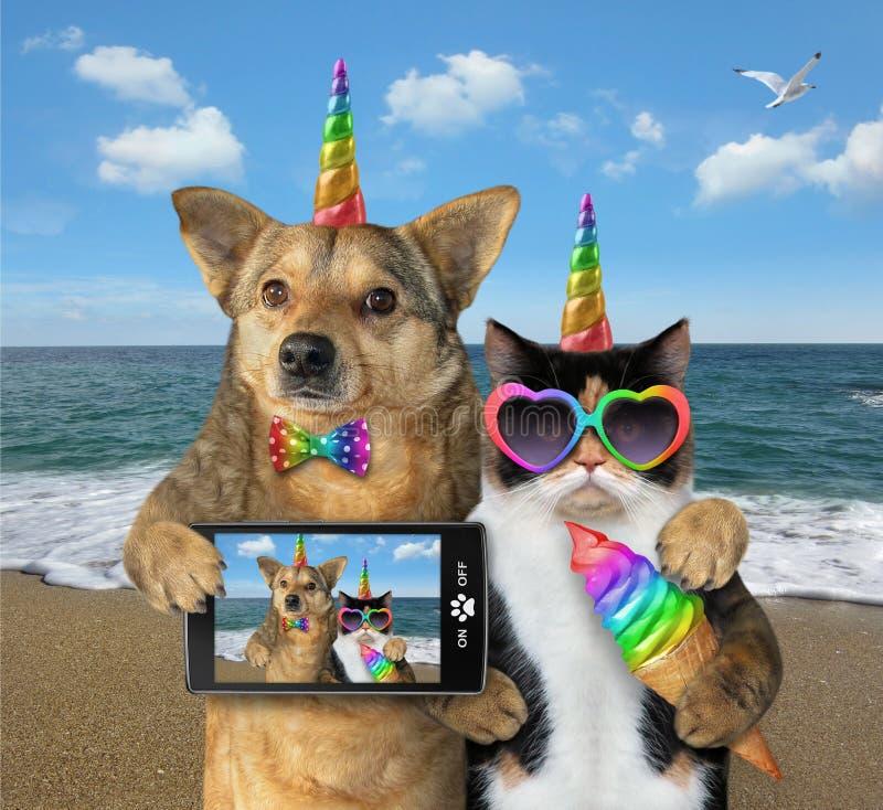 Perro con un gato en la playa junto fotografía de archivo