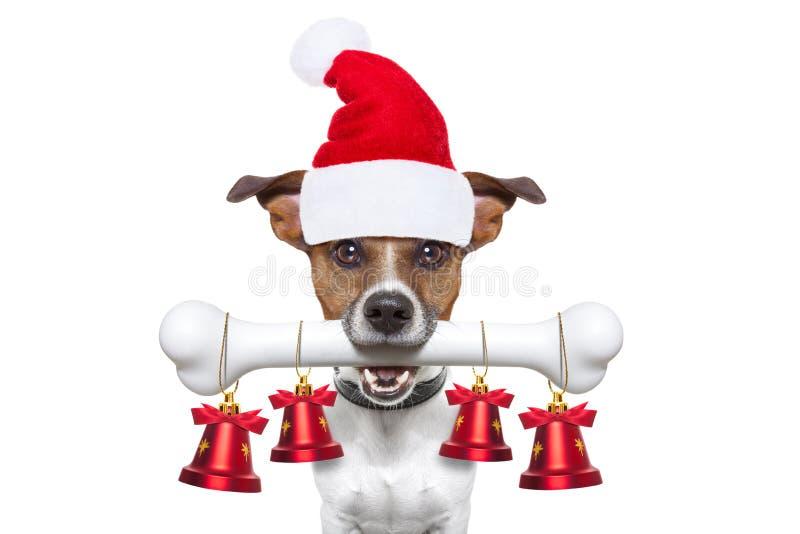 Perro con un hueso blanco para la Navidad foto de archivo