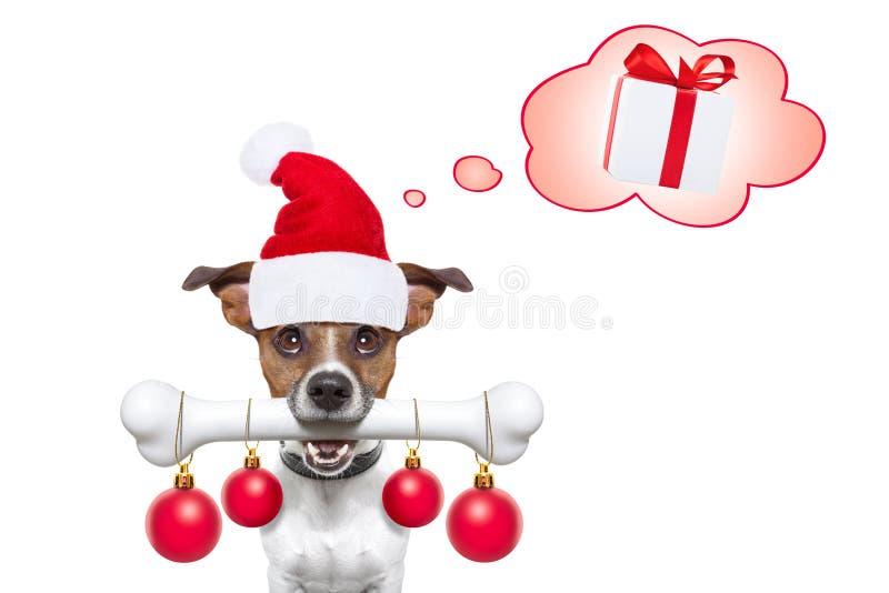 Perro con un hueso blanco para la Navidad Papá Noel fotografía de archivo