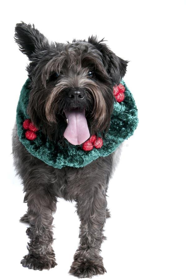 Perro con un oído para arriba en cuello del día de fiesta fotos de archivo libres de regalías