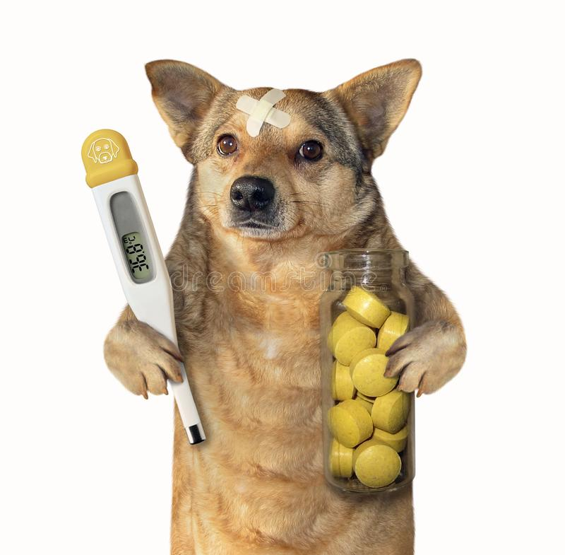 Perro con un termómetro y las píldoras fotografía de archivo