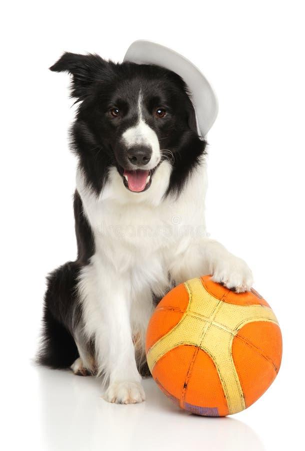 Perro con una bola del baloncesto en un fondo blanco fotografía de archivo