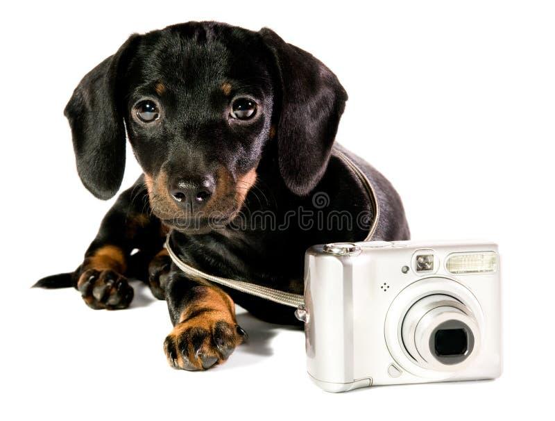 Perro con una cámara imágenes de archivo libres de regalías