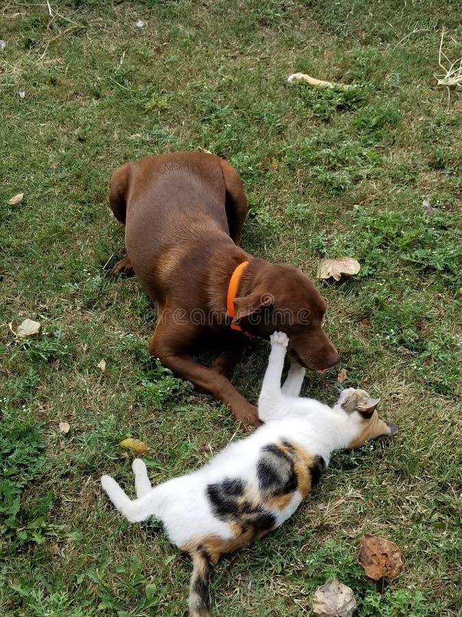 Perro contra gato imágenes de archivo libres de regalías