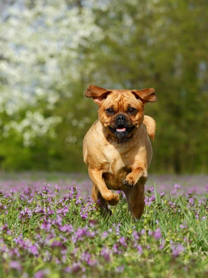 Perro corriente imagen de archivo libre de regalías