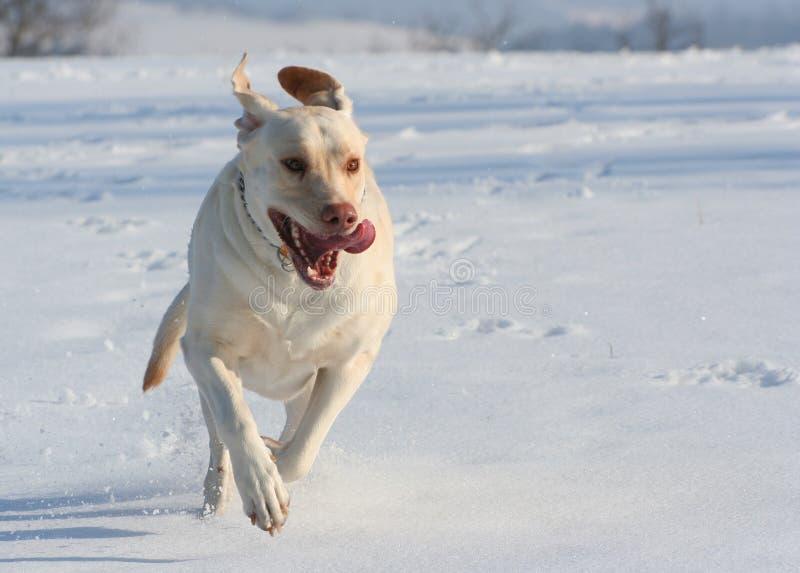 Perro corriente foto de archivo