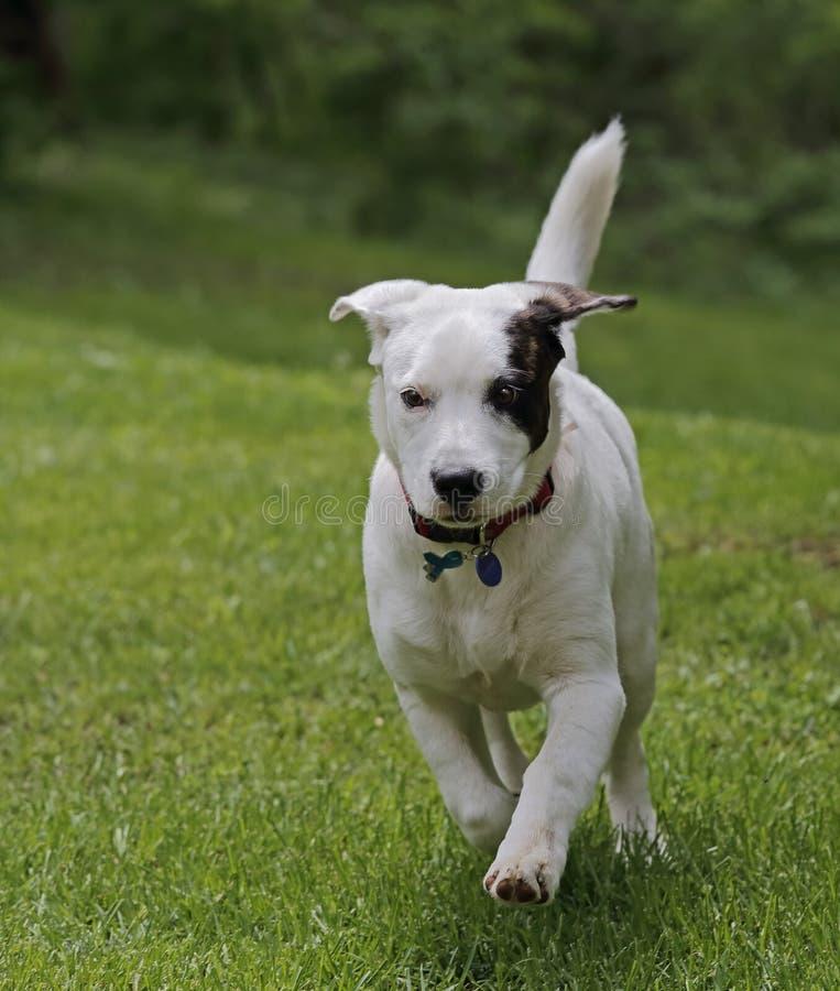 Download Perro corriente imagen de archivo. Imagen de perro, animal - 42440109