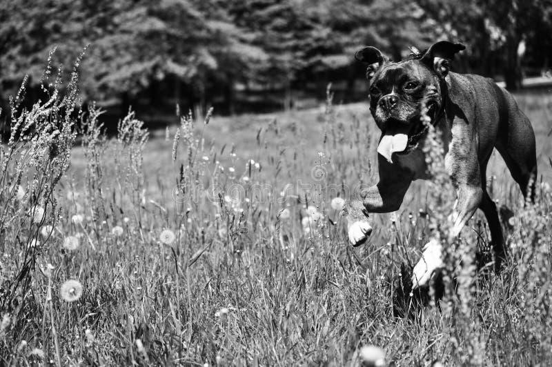 Perro corriente fotografía de archivo libre de regalías