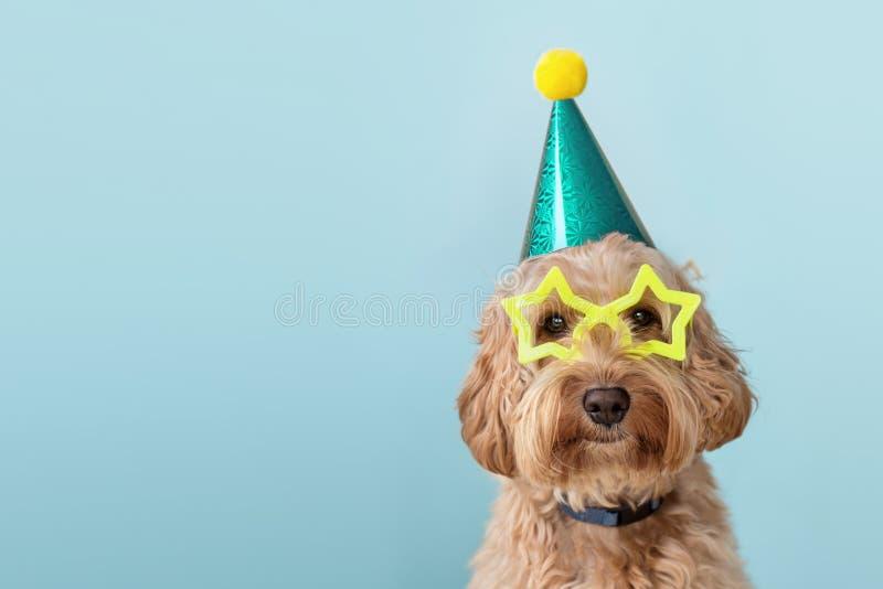 Perro cortado con sombrero de fiesta y gafas imágenes de archivo libres de regalías