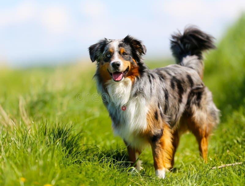 Perro criado en línea pura imagen de archivo libre de regalías