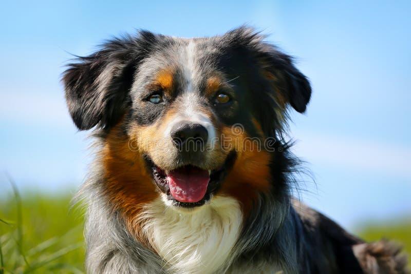 Perro criado en línea pura fotos de archivo libres de regalías