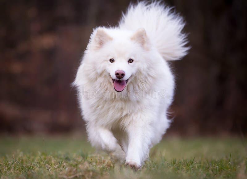 Perro criado en línea pura imagenes de archivo