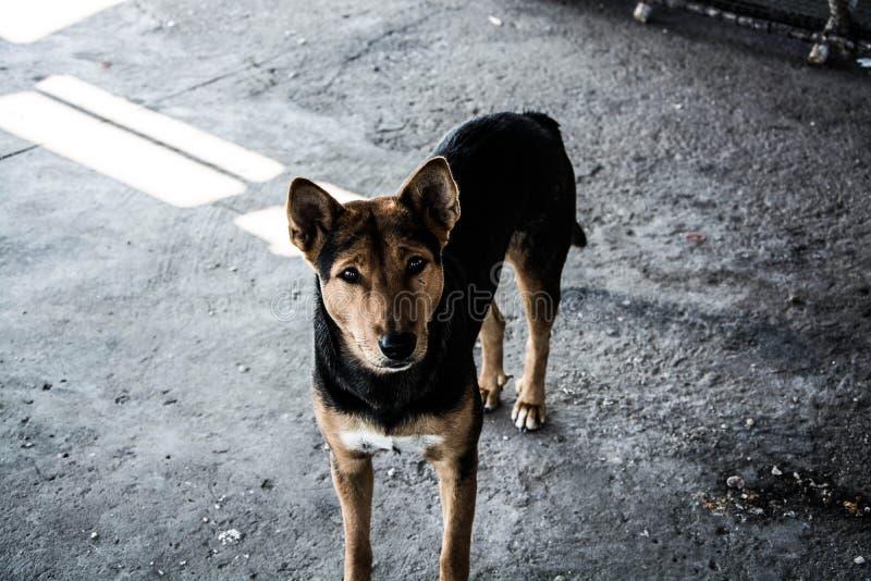 Perro de Abadoned fotos de archivo