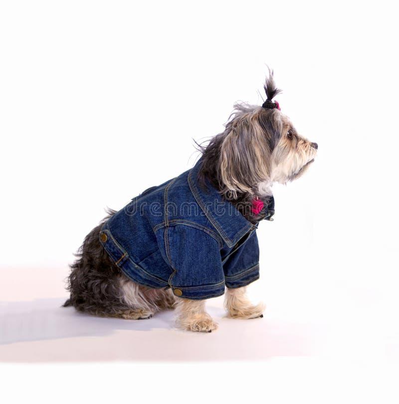 Perro de animal doméstico que espera en el país fotografía de archivo