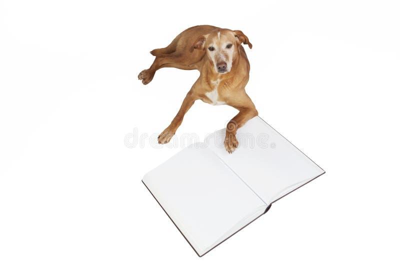 Perro de Brown que miente por un libro abierto foto de archivo libre de regalías