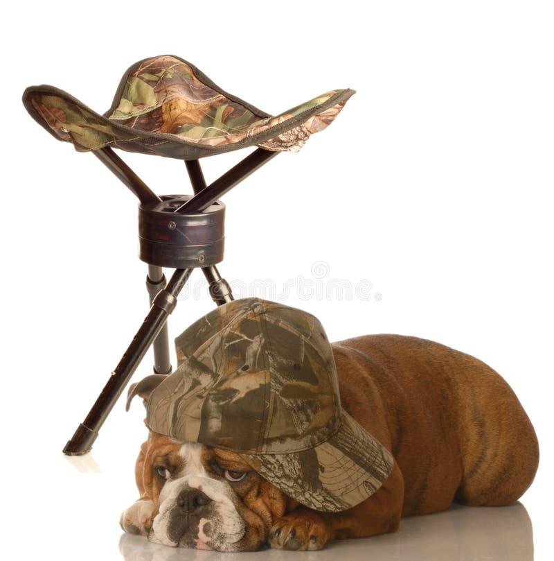 Perro de caza divertido fotos de archivo libres de regalías
