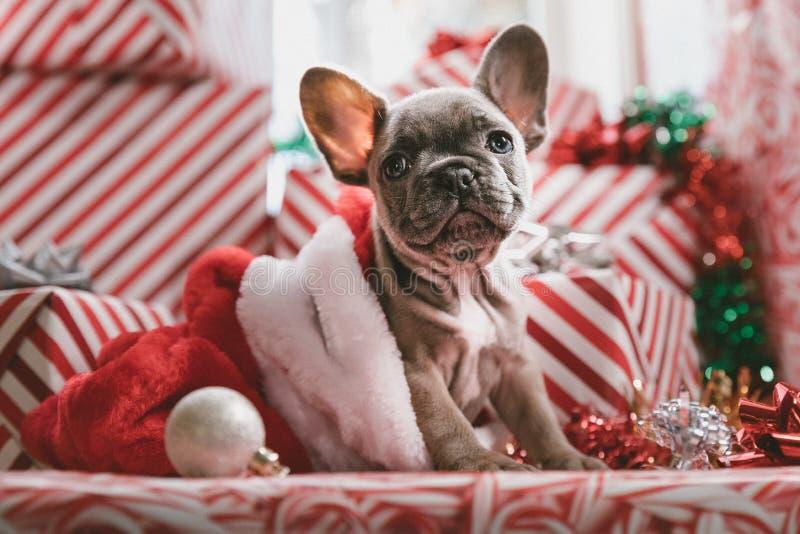Perro de Christams imagen de archivo