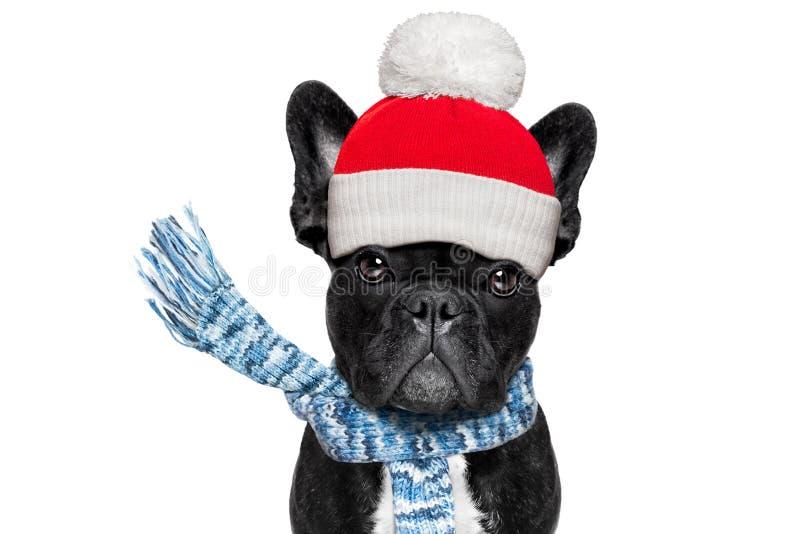 Perro de congelación del invierno fotografía de archivo libre de regalías
