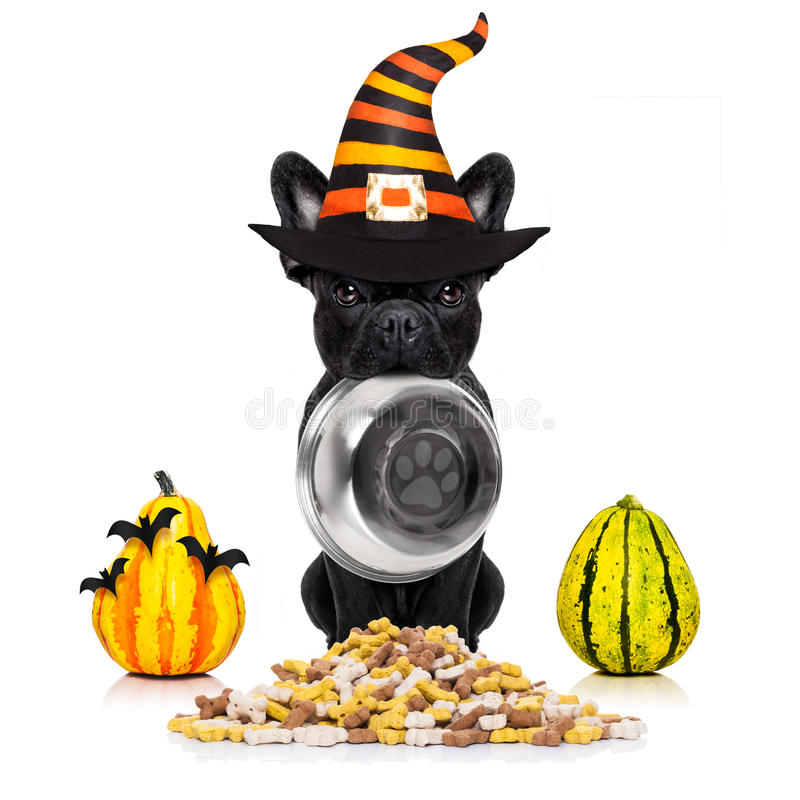 Perro de diablo de Halloween hambriento para la comida foto de archivo